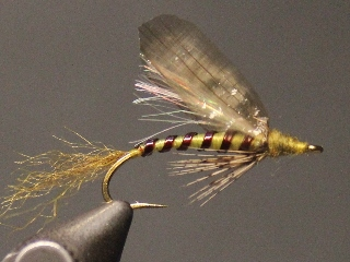 Green Drake Emerger
