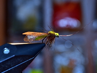 Thick Wing Caddis EB