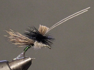 Anything Caddis