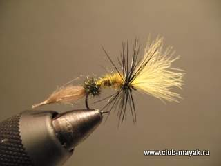 CDC-Puff Emerger