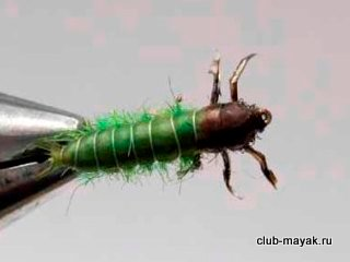 Green Caddis Larvae